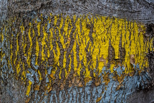 Tree, Tribe, Color, Yellow, Wood, Diker Sanders, Nature