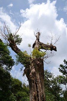 Dried Tree, Dead Tree, Dying, Hard, Harsh, Hot, Cloud