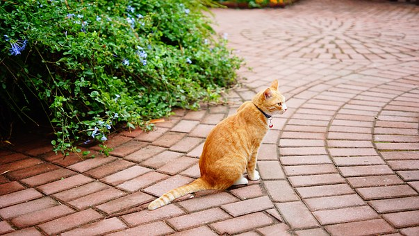 Cat, Flower, China, Ginger Fur, Outdoor
