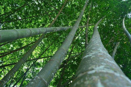 Peradeniya, Botanical, Garden