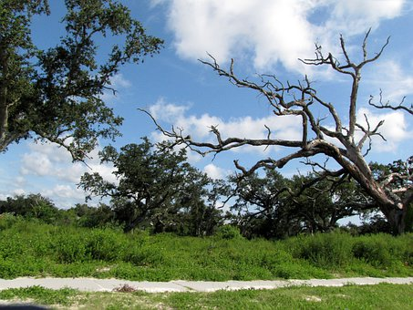 Gulf, Coast, Mississipppi, Trees, Nature, Live Oak