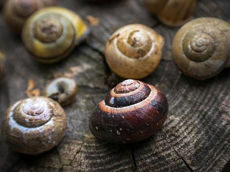 Shell, Snail, Home, Spiral, Leave, Pulled Out, Empty