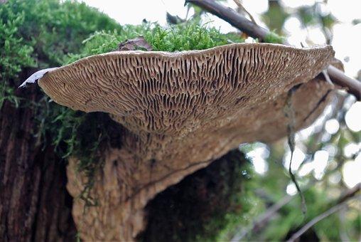 Mushroom, Tree Fungus, Forest, Nature, Autumn, Tribe