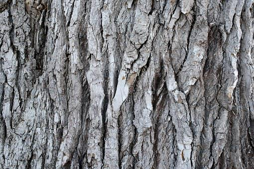 Grooved Pine Bark, Old Tree, Plant, Background