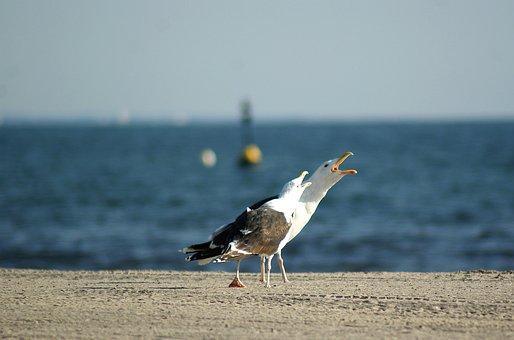 Sea, Gull, Beach, Call, Boje, Water