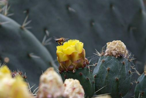 Bee, Cactus, Botanical, Insect, Plant, Green, Spring