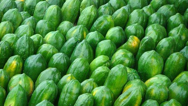 Fruit, Papaya, Harvest, Green, Production, Agriculture