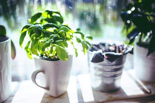 Basil, Cup, Herbs, Green, Leaf, Leaves, Cooking, Spring