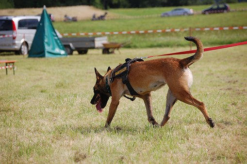 Search Dog, Rescue Dog, Dog, Animal, Pet, Schäfer Dog