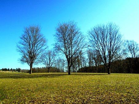 Wood, Spring, Cold, Finnish, Espoo, Luukki, Nature