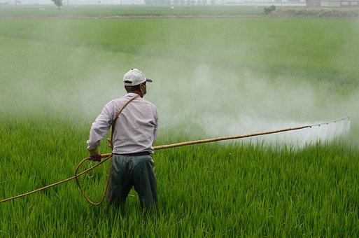 Herbicide, Avignon, In Rice Field, Avignon A Surname