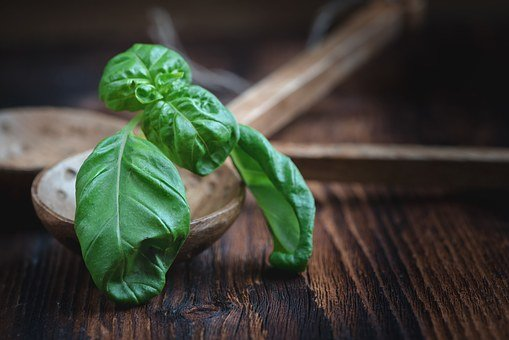 Basil, Leaves, Plant, Spice, Green, Herbs, Leaf, Aroma