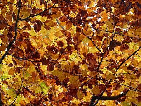 Leaves, Autumn, Canopy, Golden Autumn