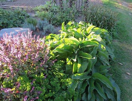Garden, Medicinal, Comfrey, African Blue Basil, Floral