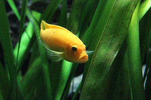 Fish, Orange, Green, Ocean, Water, Sea, Meeresbewohner