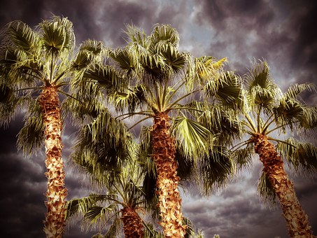Palm, Palm Tree, Desert, Nature, Leaves, Natural, Plant