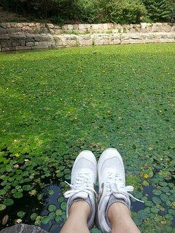 Pond, Shoes, Virtue Kotobuki Shrine