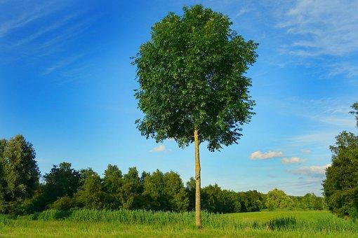 Tree, Lonely Tree, Field, Landscape, Scenic, Sky