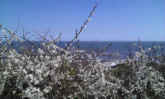 Sea, Horizon, Blue, Hawthorn, Flower, White, Flowers