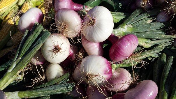 Red Shallots, Shallots, Noble Onion, Onion, Sharp