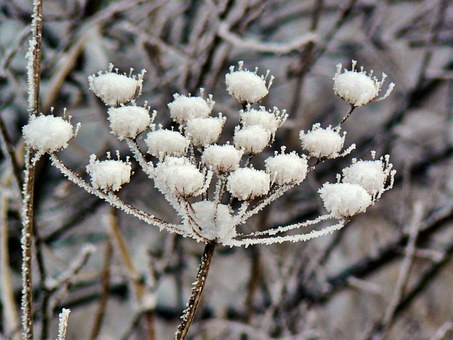 Plant, Winter, Snow, Frozen, Crystals, Flora, Ice, Icy