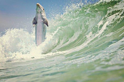 Dolphin, Sea, Wave, Marine Mammals, Water, Animals