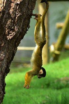 Monkey, Small, äffchen, Cute, Sweet, Animal, Fur, Funny