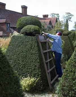 Topiary, Electric Hedge Trimmer, Gardener, Yew