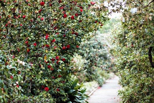 Path, Walk, Greenery, Flowers, Red, Green, Bushes