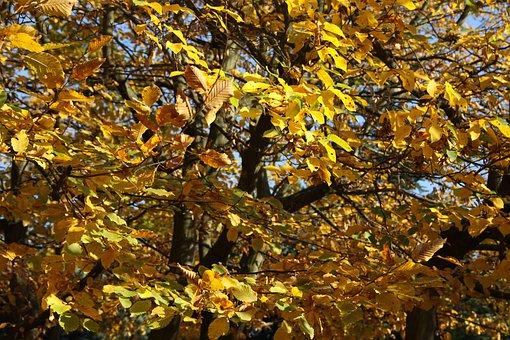 Fall, Leaves, Colors, Nature, Autumn Leaves