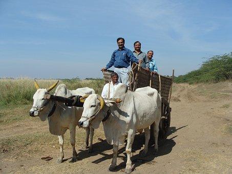 Oxen, Cart, India, Men, People, Transportation, Culture