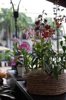 Flowers, Plant Pot, Nature, Flower, Cattleya Orchid