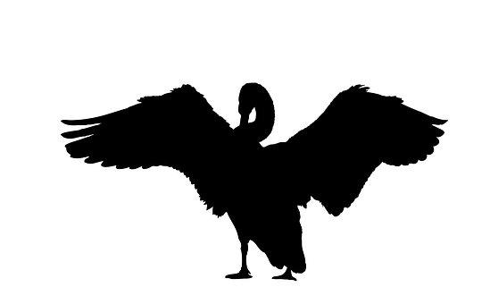 Swan, Silhouette, Black, White, Background, Art, Bird