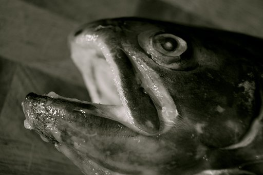 Fish, Slaughtered, Fished, Salmon, Black, White, Death