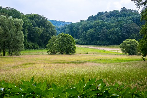 Forest, Pasture, Meadow, Tree, Landscape, Mountains