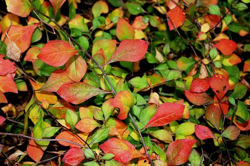 Ground Cover, Leaves, Greens, Reds, Yellows