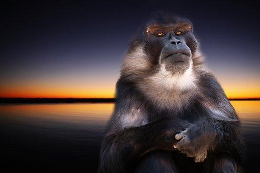 Monkey, Nature, Sunset, Animal, äffchen, Mammal, Wild