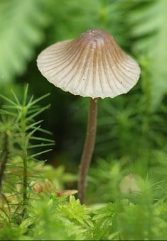 Mushroom, Mushrooms, Nature, Forest, Autumn, Moss