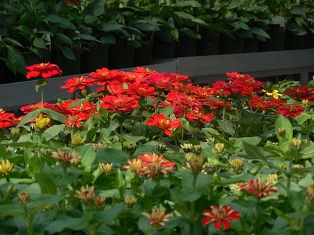 Flowers, Greenhouse, Garden, Plant, Green, Gardening