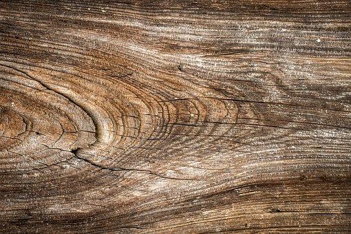 Wood, Texture, Wild, Hardwood, Interior, Wall, Pattern