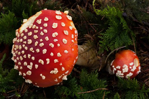 Matryoshka, Amanita Muscaria, Small, Large, Mushroom