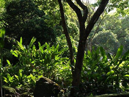Tree, Tropical, Jungle, Foliage, Natural, Leaf