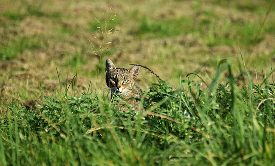 Cat, Nature, Animal, Kitten, Grass, Pet, Fur, Vet