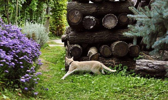 Autumn, Garden, Kitten, Cat, Nature, Green, Plants