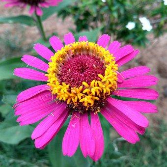 Flowers, Garden, Beautiful, Nature, Green, Summer