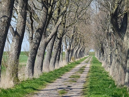 Avenue, Coast, Dike, East Frisia, Askew, Windy, Lane