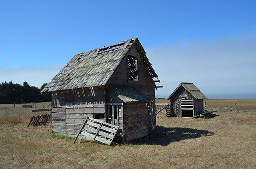 Chicken, Coop, Farm, Poultry, Agriculture, Barn