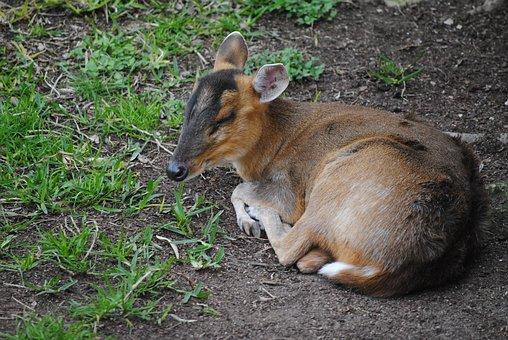 Deer, Little, Animal, Wild, Mammal, White, Cute