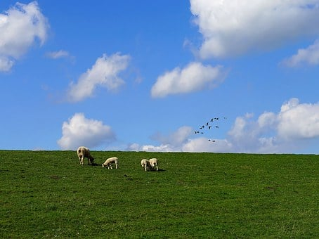 Dike, Clouds, Sheep, North Sea, Sky, Landscape, Grass