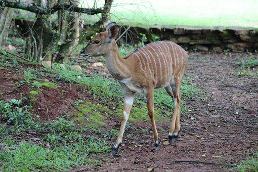 Deer, Wildlife, Doe, Nature, Wilderness, Fawn, Mammal